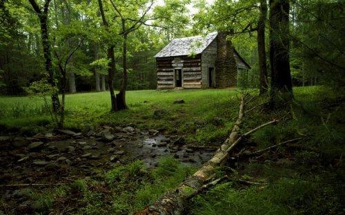Уединённые лесные дома (20 фото)