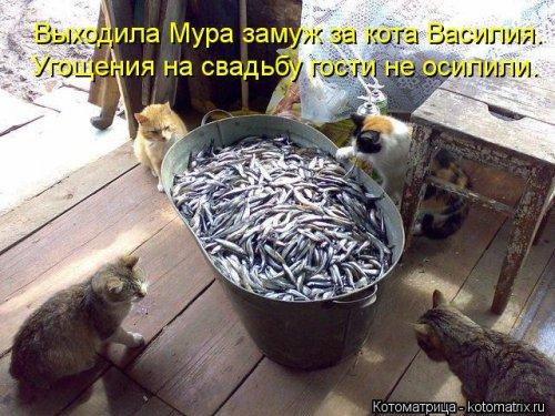 Новые котоматрицы (25 шт)