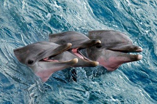 Топ-10 Интересных фактов о морской флоре и фауне