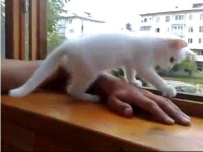 Заботливая кошечка!