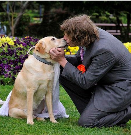 Animal human wedding