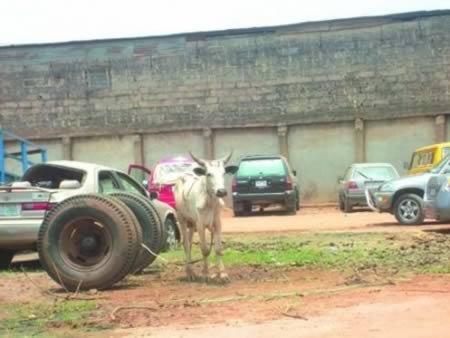 10 Невероятных историй о животных, которых арестовали