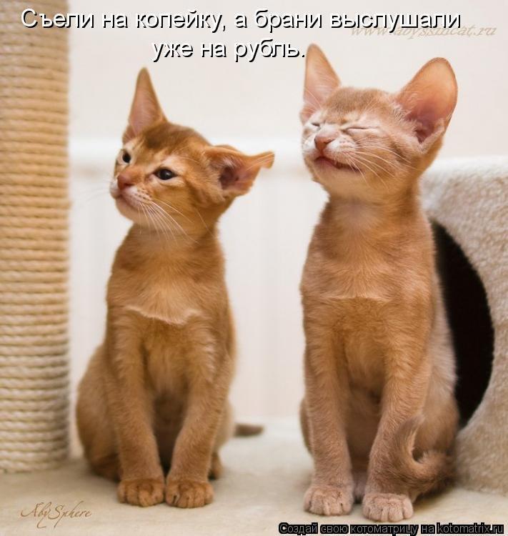 вот, картинки забавные кошки с надписью какой самый