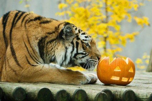 Животные в зоопарках во время Хэллоуина (8 фото)