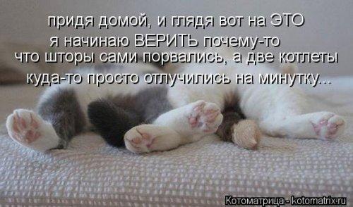 Котоматрицы-новинки (19 шт)