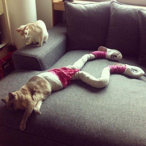 Meowtfit of the day: новый фотомем с кошками (22 фото)