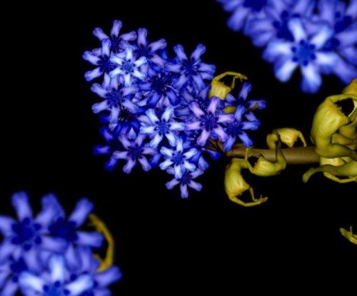 Необычные изображения, созданные фотографом Сесилией Уэббер (20 шт)