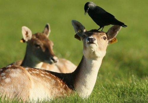 Чудесные животные и их детёныши (30 фото)