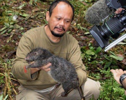 Топ-10 Интересных случаев гигантизма у животных
