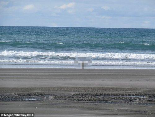 Загадочное животное на побережье Новой Зеландии (3 фото)