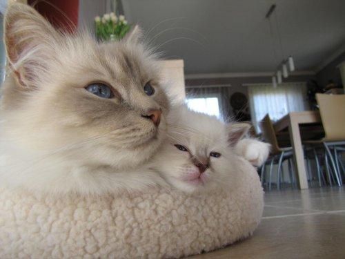Забавный мир животных (32 фото)
