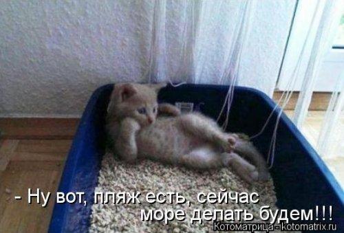 Забавные котоматрицы для вас (28 шт)