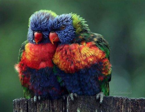 Умильные животные (25 фото)