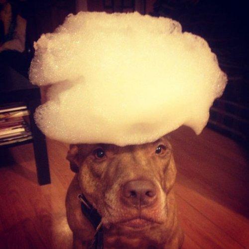 Невозмутимый пёс Скаут с ангельским терпением (29 фото)