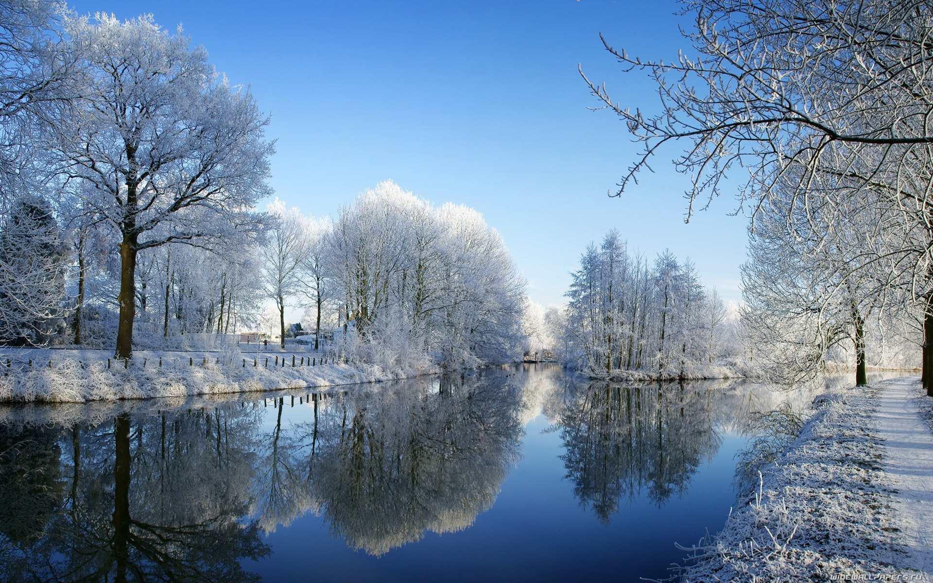 фотографии с зимними пейзажами ветеринарной медицине