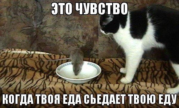 http://www.bugaga.ru/uploads/posts/2013-12/1387193857_prikolnye-kotiki-4.jpg