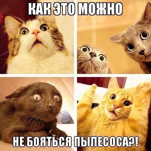 картинки котиков прикольных фото