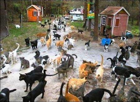 10 Странных мест, посвящённых любви к кошкам
