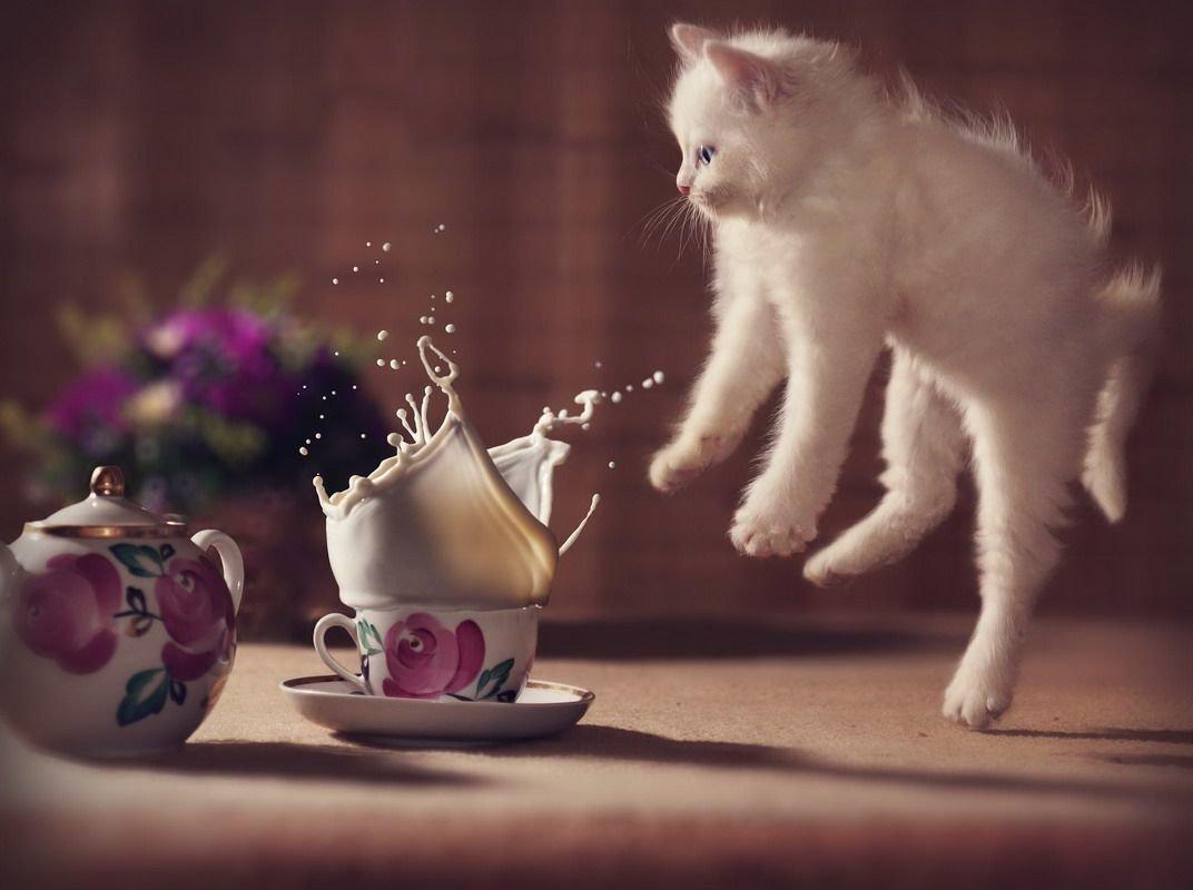 Картинки с животными доброе утро нежные