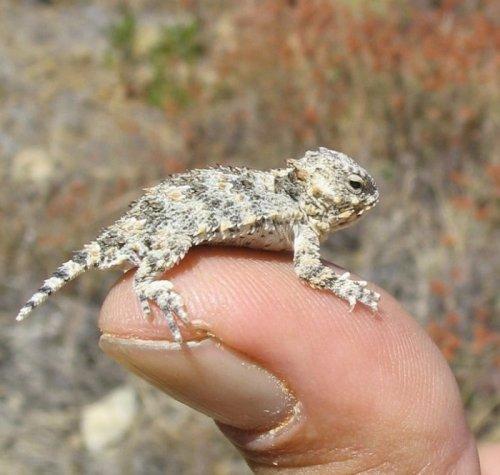 Животные-крошки на кончиках пальцев (18 фото)