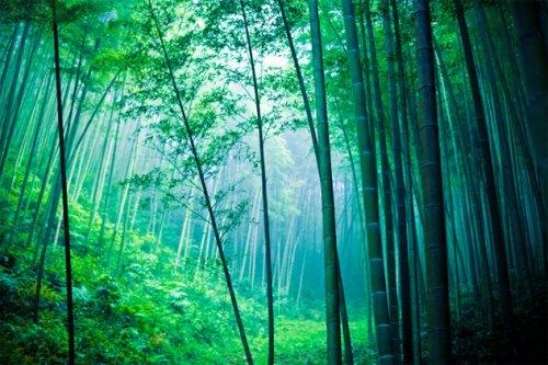 Топ-10 Поразительно приспособившихся растений и животных