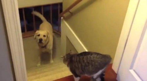 Коты не дают пройти собакам