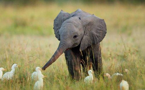 Очаровательные животные (35 фото)