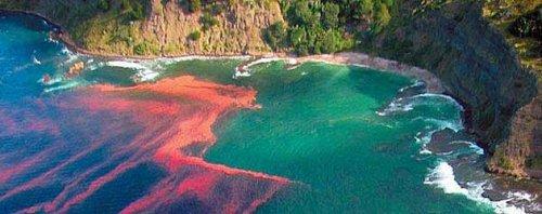 Топ-10: Невероятные явления океана