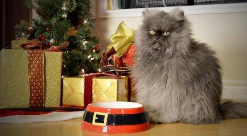 Праздничное поздравление от знаменитых Интернет-котиков