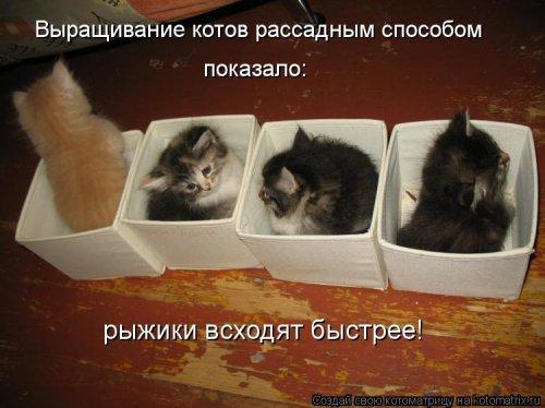 Новые чудесные котоматрицы (31 шт)