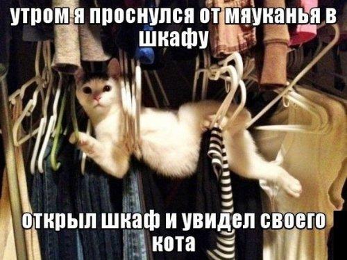 Прикольные котики (18 фото)
