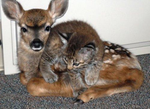 Странные и невероятные примеры дружбы животных (30 фотографий)