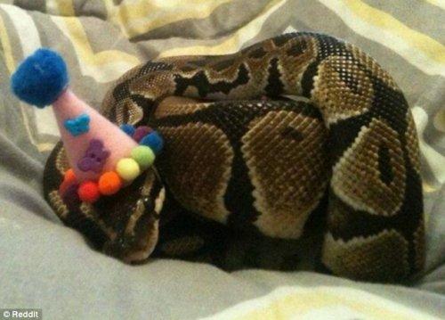 Новая фотозабава в Интернете: змеи в шляпах (12 фото)