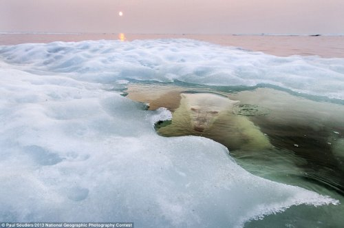 ������ ���������� 2013 ���� �� National Geographic (12 ����)