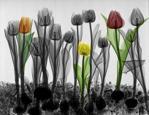 Природная рентгенография Ари вант Рита (16 фото)