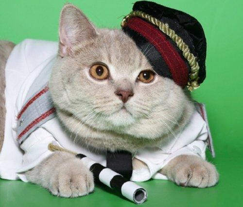 Топ-10: Кошки с удивительной карьерой