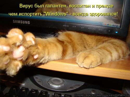 Свежий сборник котоматриц (29 фото)