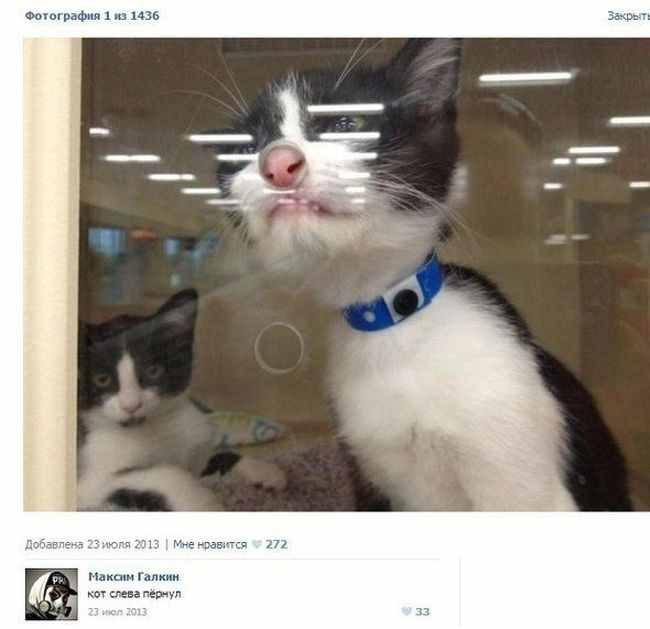 Смешные комменты из соцсетей (32 фото)