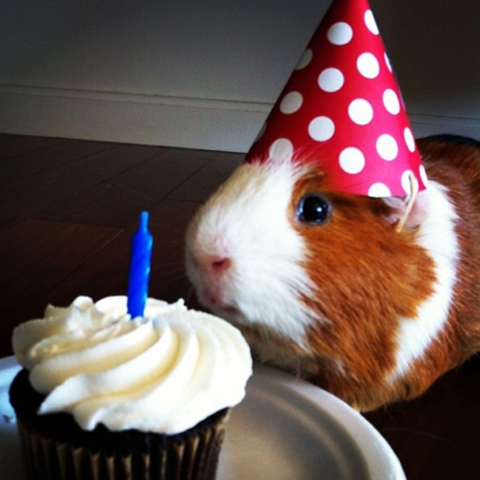 С днем рождения картинки прикольные с животными, краснодара