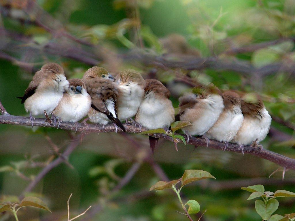 невинномысске птичий сон фото воздушных шарах