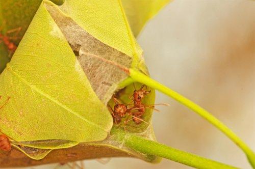 Топ-10 Примеров странного поведения муравьёв