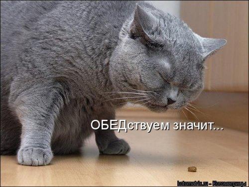 Свежая порция котоматриц (34 шт)