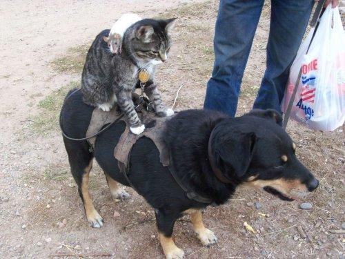 Позитивные фотографии с животными (31 шт)