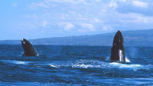 Топ-10 Невероятно удивительных фактов о китах