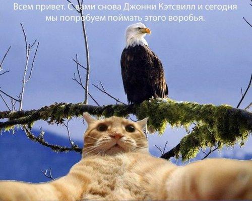 Новый фотомем: рыжий кот Джонни Кэтсвилл и его репортажи (30 фото)