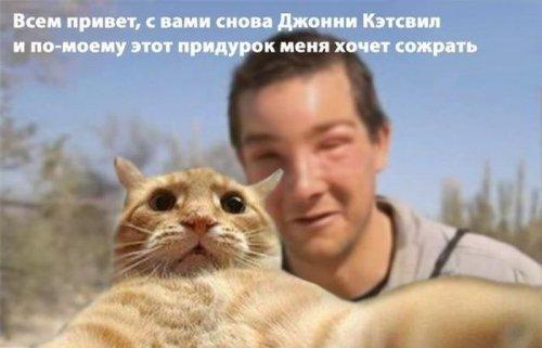 кот Джонни Кэтсвилл