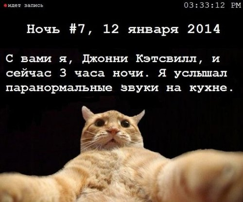 рыжий кот мем