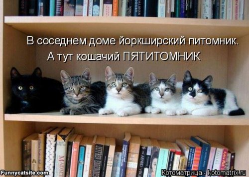 Новые прикольные котоматрицы (29 шт)