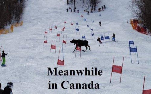Тем временем в Канаде (30 фото)