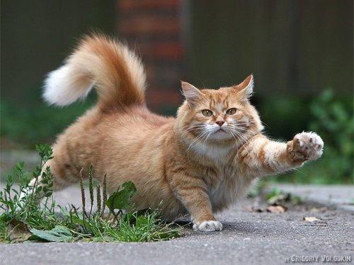 Коты и кошки (16 фото)